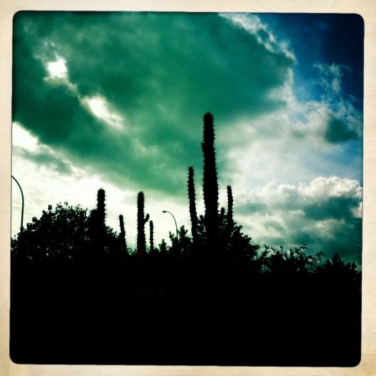 Curious Cactus